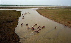 Population of milu deer grows in China
