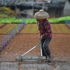 Spring farming in Haikou, S China