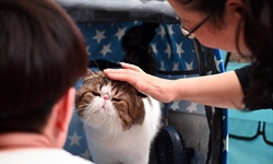 Pet cat tests positive for COVID-19 virus in Hong Kong