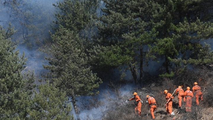 China to strengthen forest and grassland fire prevention and control