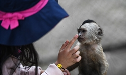 Hunan creates first plan to pay wildlife breeders