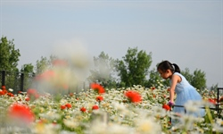 Beijing horticultural expo finishes filmmaking of botanical documentary