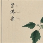 Between art and science: British and Chinese 'hybrid' botanic art in 18th century