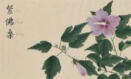 Between art and science: British and Chinese 'hybrid' botanic art in...