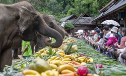 China's Yunnan celebrates World Elephant Day