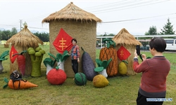 China Focus: Chinese festival marks nation's hard-won bumper harvest