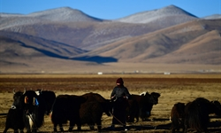 Ecological animal husbandry at Jiatang Grassland in Qinghai
