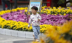 Chrysanthemum exhibition to kick off in Yinchuan, NW China