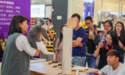 Cat contest held in Nanning City