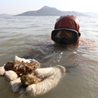 Sea cucumber harvest in Dalian