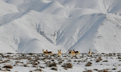 Wild animals forage at Haltent Grassland in Gansu
