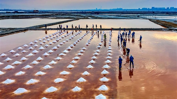 Salt Lake of Yuncheng in Shanxi enters into harvest season